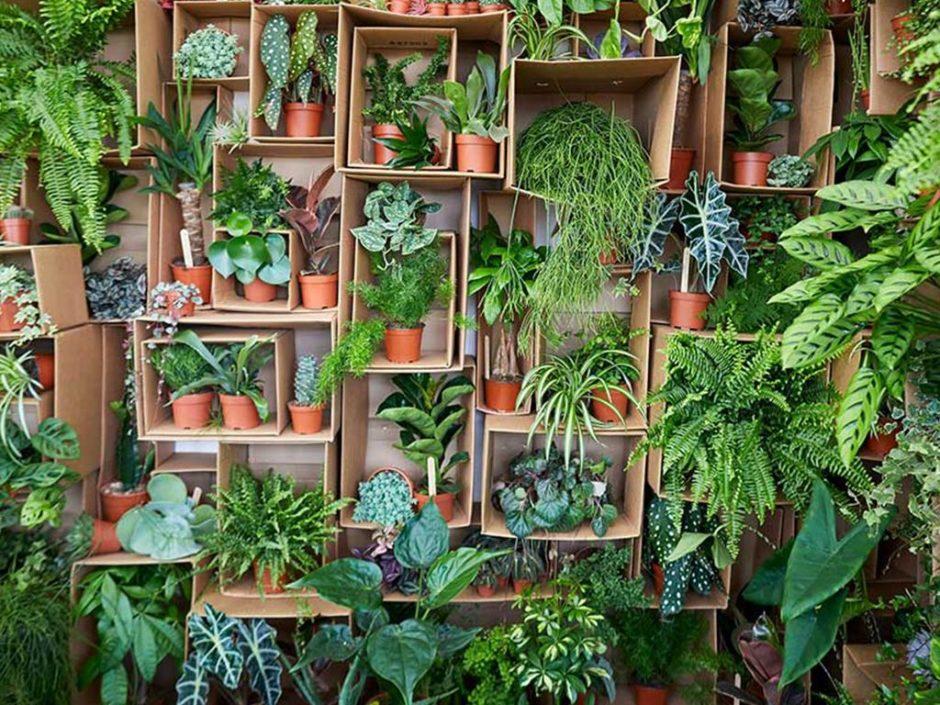 super sized houseplants