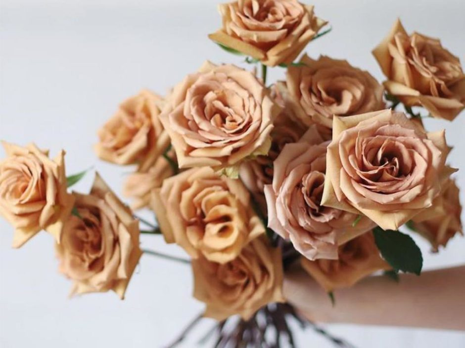 toffee roses