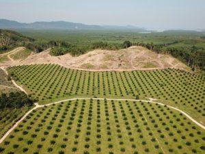 norway ban deforestation