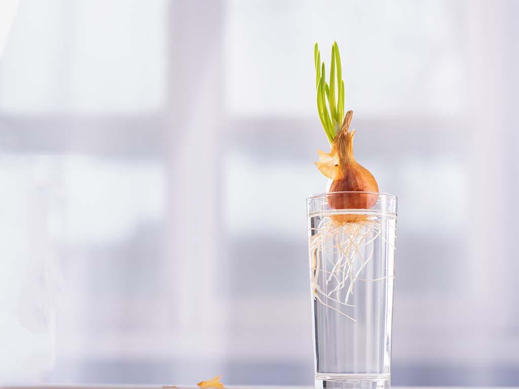 regrow vegetables water