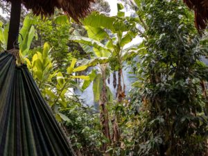 virtual rainforest