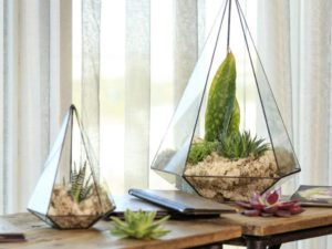 Brighten Up Your Home With these Beautiful, Eco-Friendly, Personalised DIY Terrarium Kits