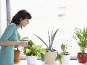 Where To Buy Plants Online During the Coronavirus Lockdown