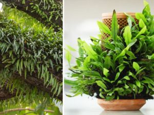 terraplanter indoor garden