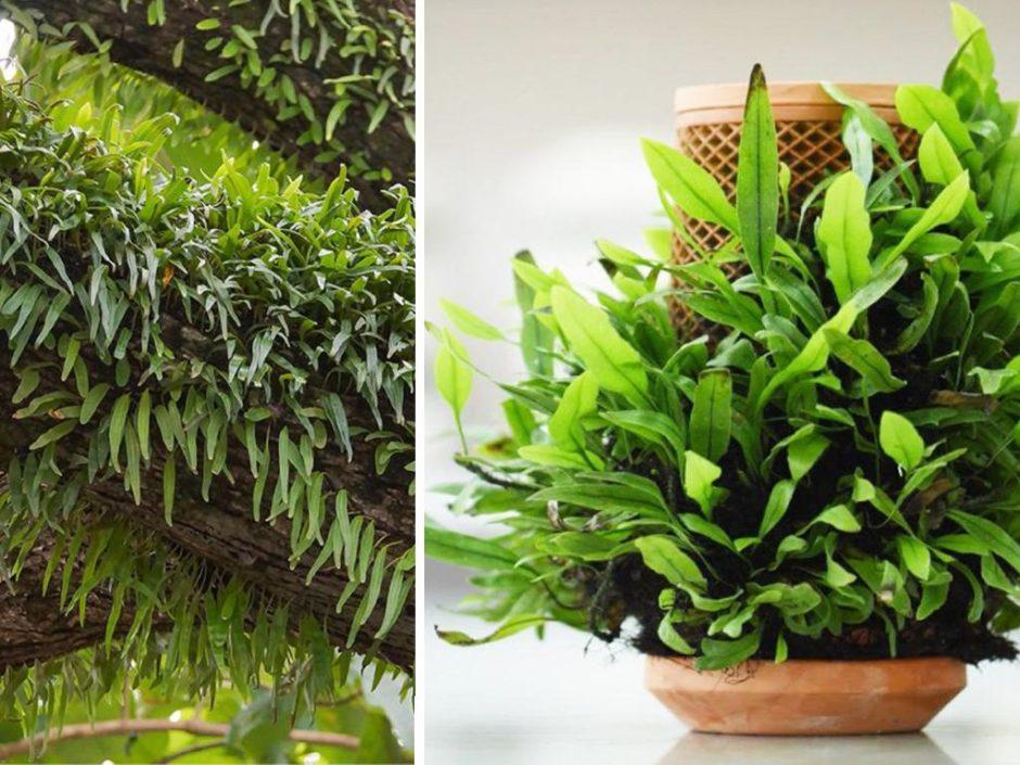 terraplanter indoor garden