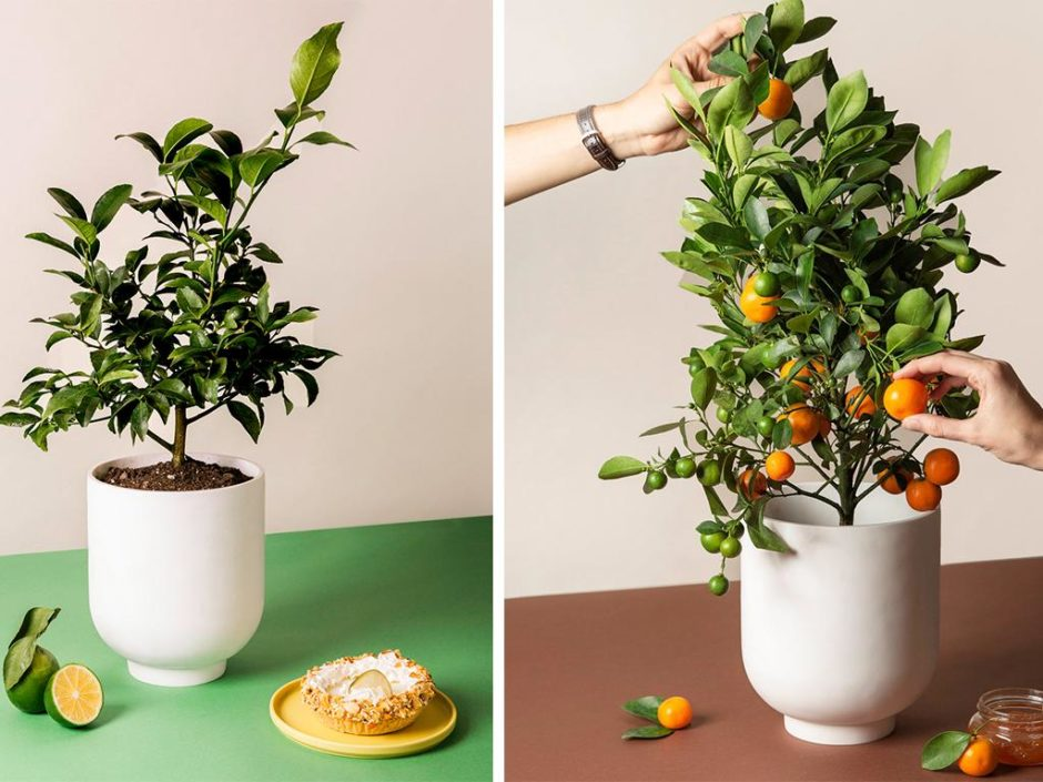 via citrus trees