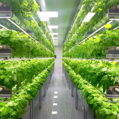 mini crops urban farm
