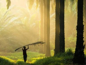 6 Reasons Why Sustainable Palm Oil Is Vital To the Future Of the Planet