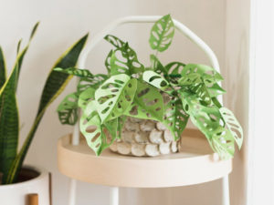 Upcycle Your Paper into Plants That Require No Watering and Won't Wilt