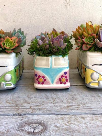 succulent artworks volkswagen bus