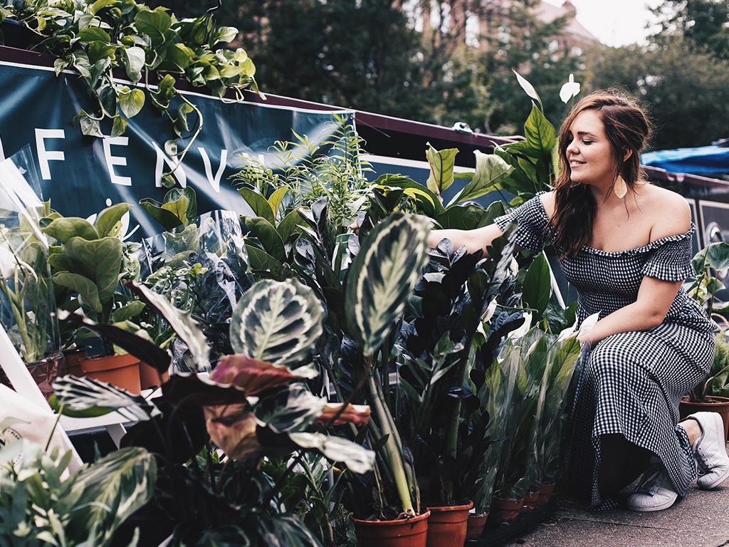 leaf envy plant parenthood