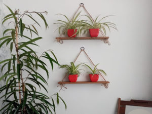 Here's How You Can Upcycle and Create Stylish Plant Shelves for Free