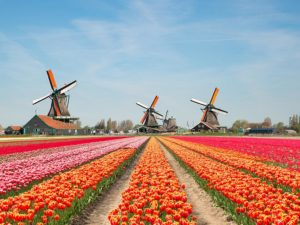 Dutch Tulip Farmers Have Found A Way To Send Uplifting Messages Using Their Flower Fields