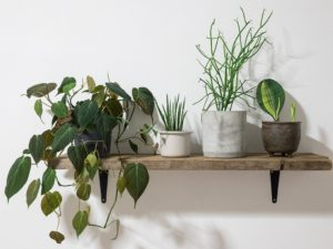 Reinvigorate Your Home By Transforming It Into a Leafy, Jungle-Style Hideaway