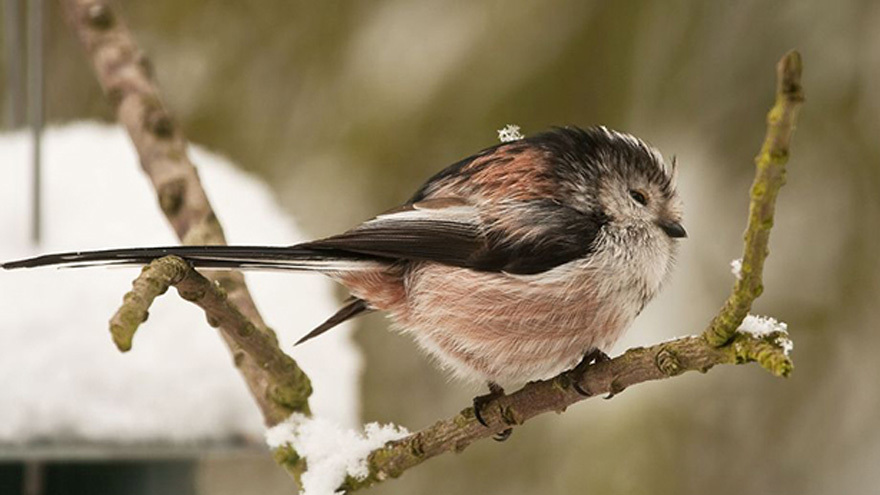 Look after our feathered friends