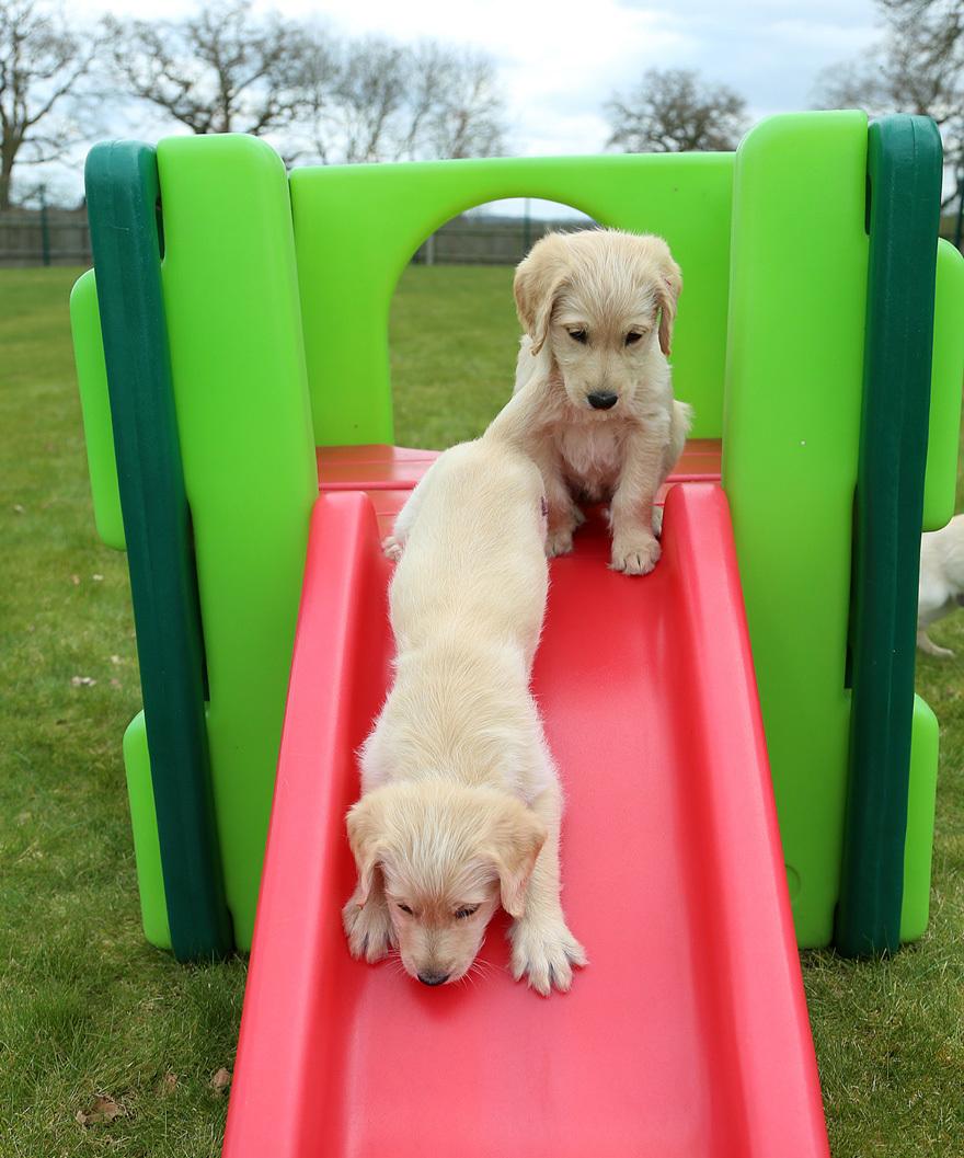 Name a My Weekly pup! Pic: Stewart Turkington