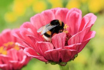 Bee getting nectar