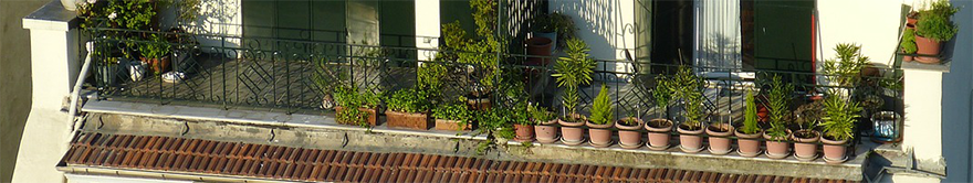 Potted plants on balcony in sunshine