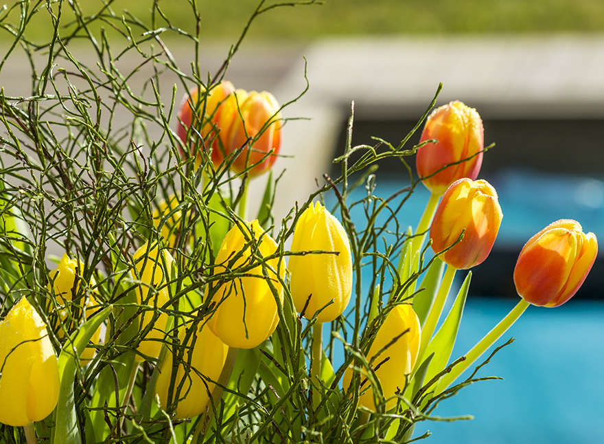 Tulips in a variety of colours Pic: Rex/Shutterstock