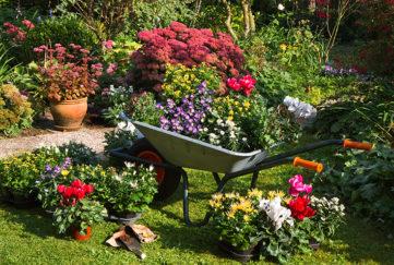 Plants for planting in September Pic: Rex/Shutterstock