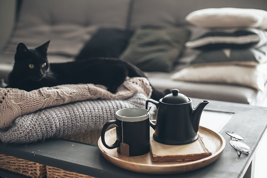 Tea and teapot on tray with 2 cats in background