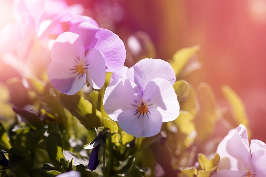 Relaxing pink flowers in a garden