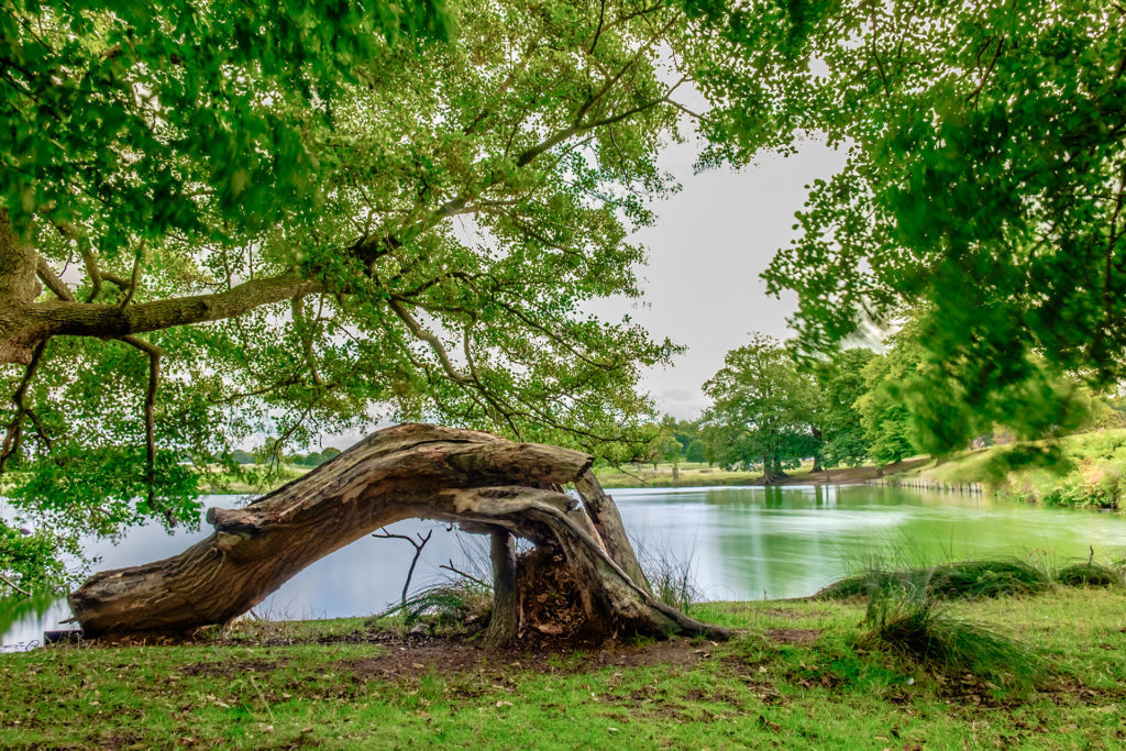 Pen Pond, Richmond Park Pic: Istockphoto