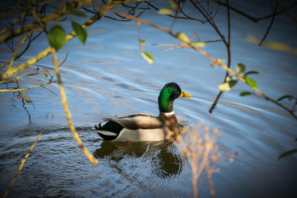 Ryton Pools Pic: Istockphoto