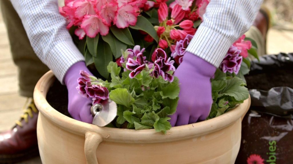 Hands planting plant in plant pot