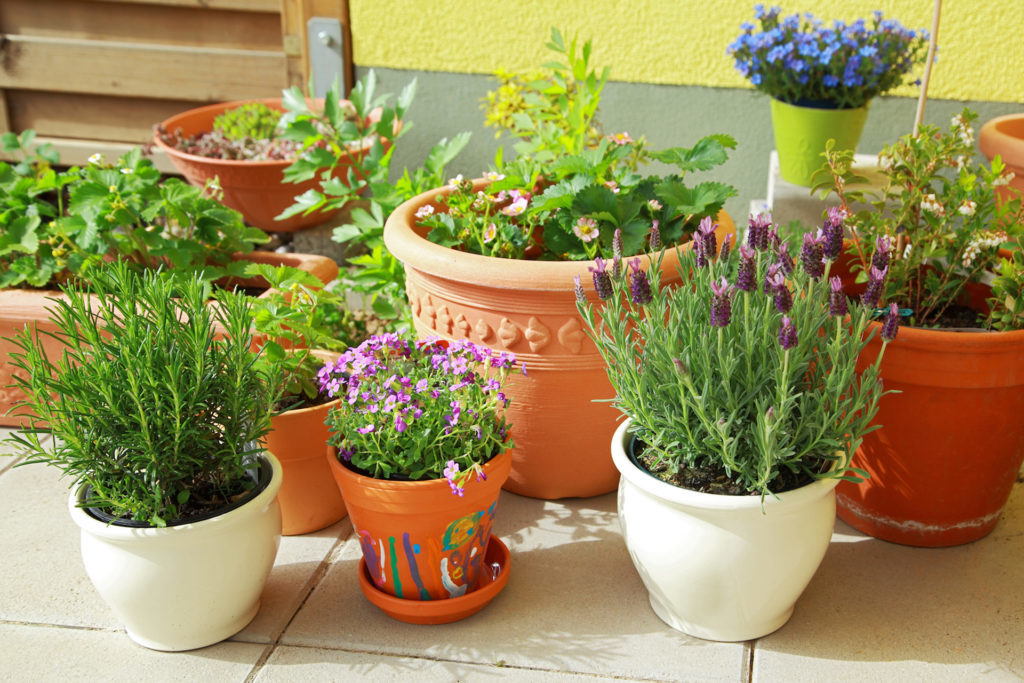 Plant pots in the shade