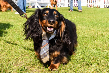 A happy dog wearing a tie Pic: Julia Claxton