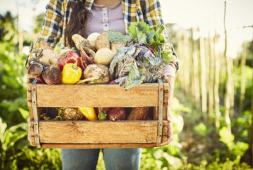 Female carrying freshly harvested vegetables in crate. Close-up of various organic food in box. Woman is standing at organic farm.