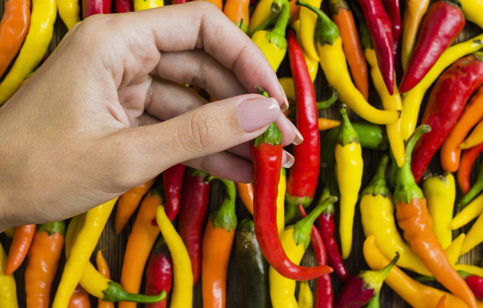 Woman's hand with red chili pepper.