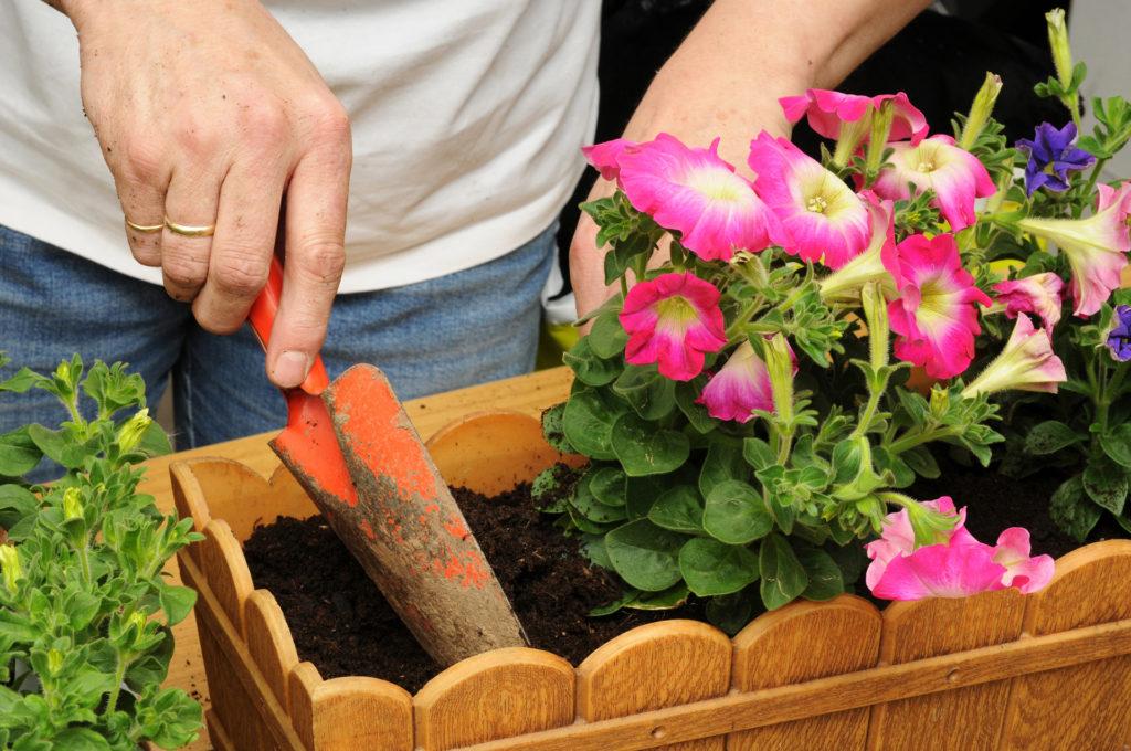 Planting a flower box