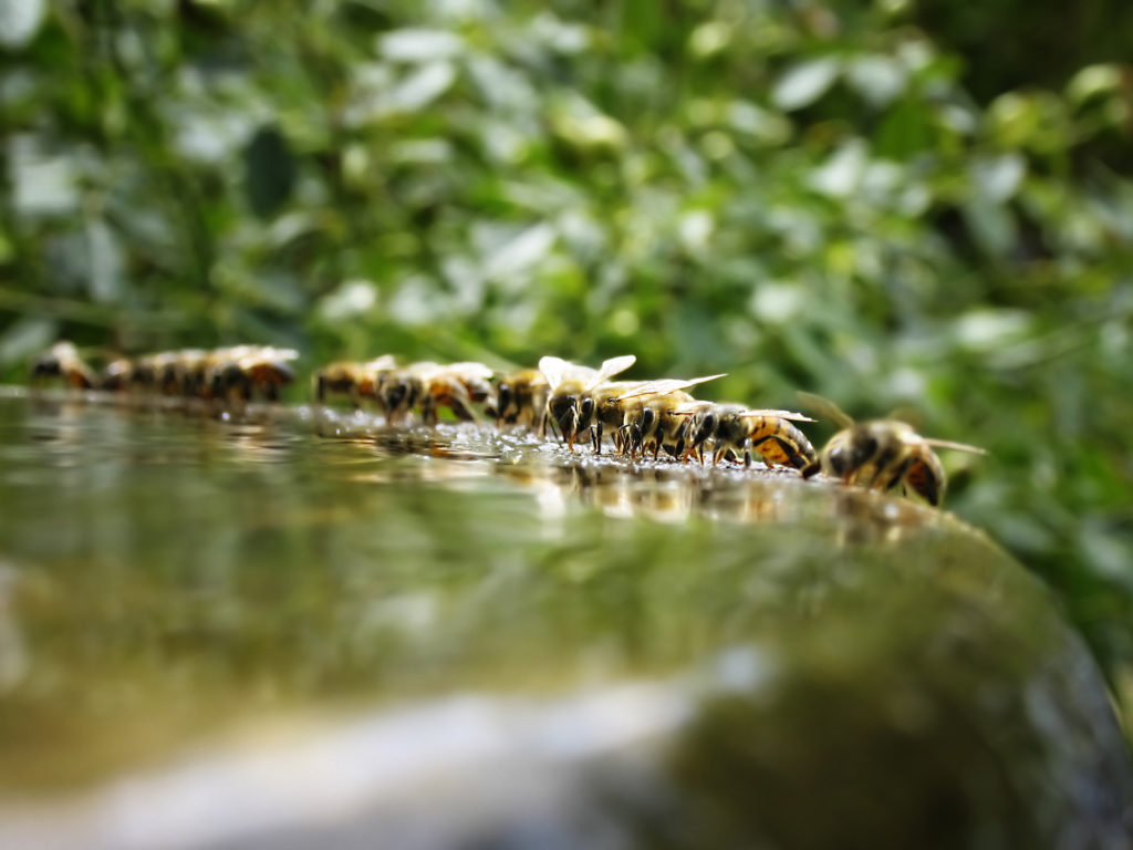 Bees gathering on the rim of a fountain