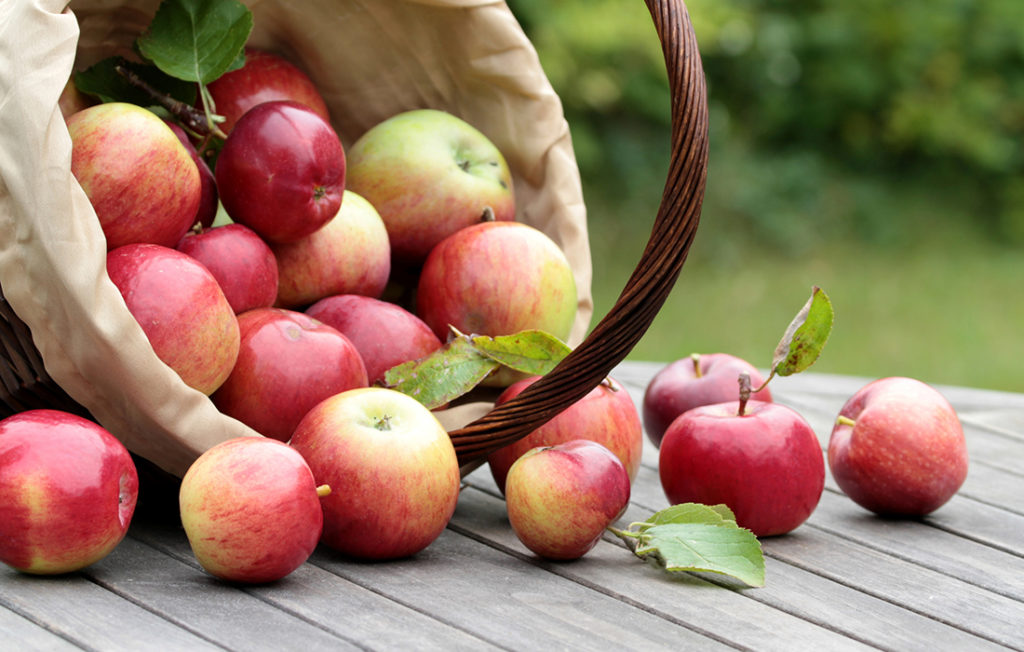 Organic red apples in a basket on the old table close up image Pic: Istockphoto