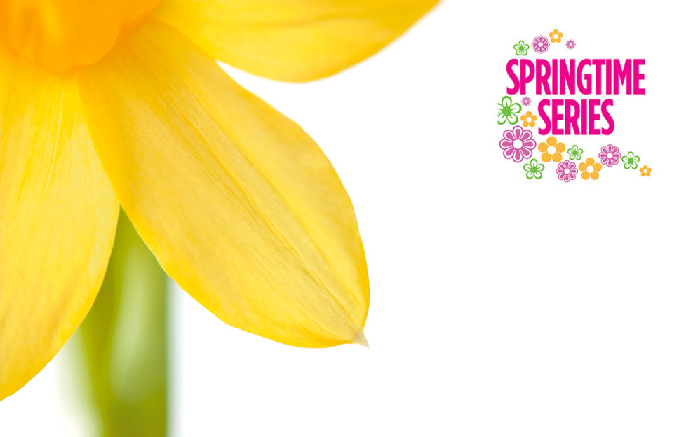 Illustration of a daffodil Pic: Rex/Shutterstock