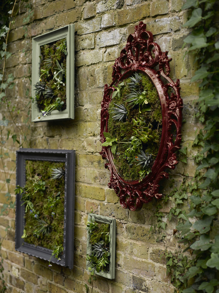 Picture frames with plants