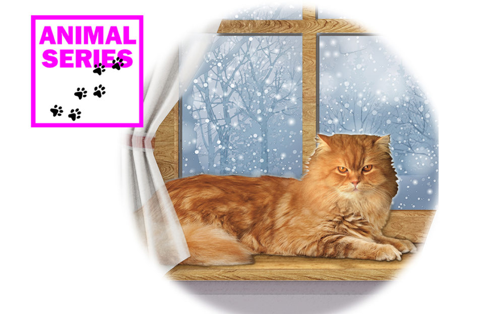 A large ginger cat sitting at a window Illustration: Rex/Shutterstock