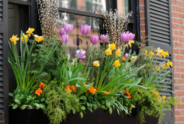 Window Box Flower Arrangement Pic: Istockphoto