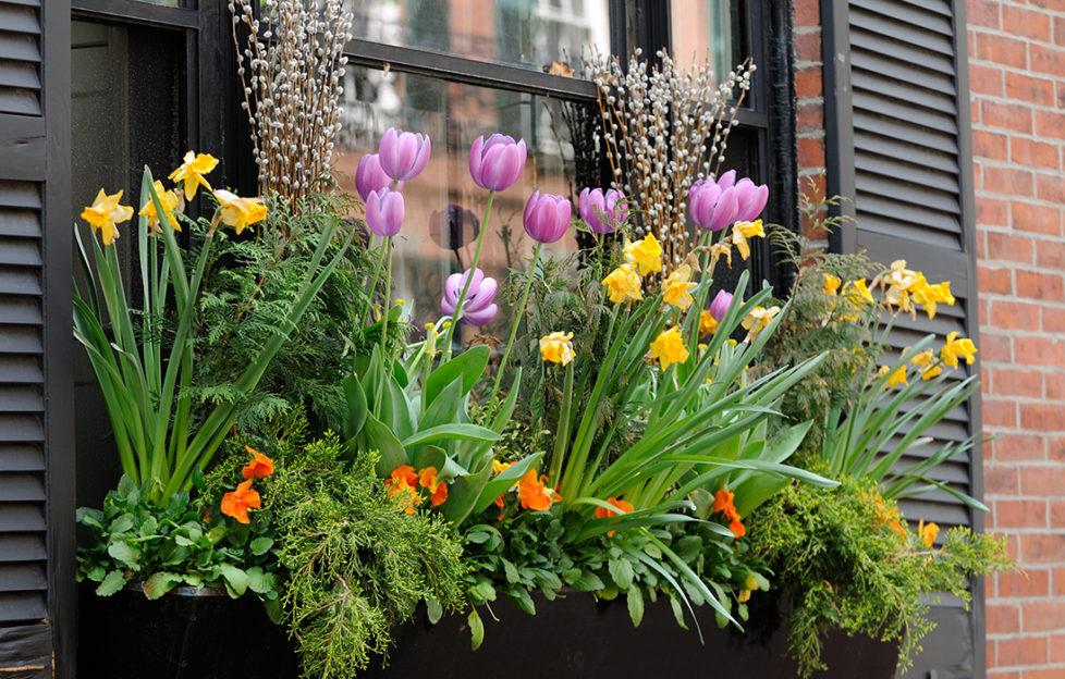 Window Box Flower Arrangement Pic: Istockphoto