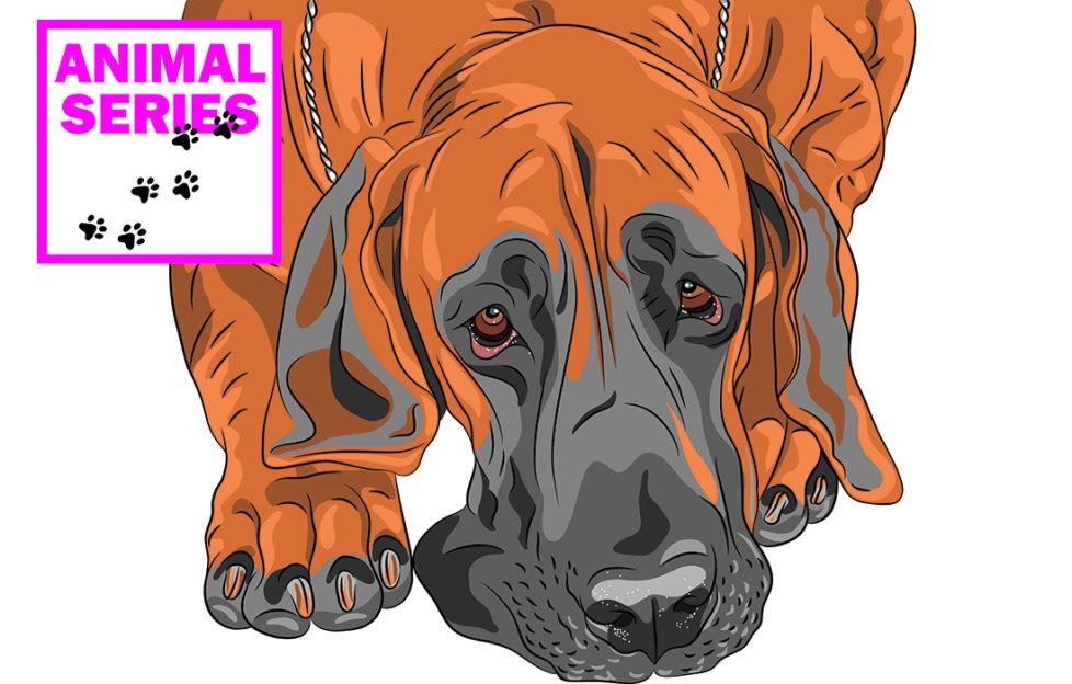 Old dog looking sad Illustration: Rex/Shutterstock