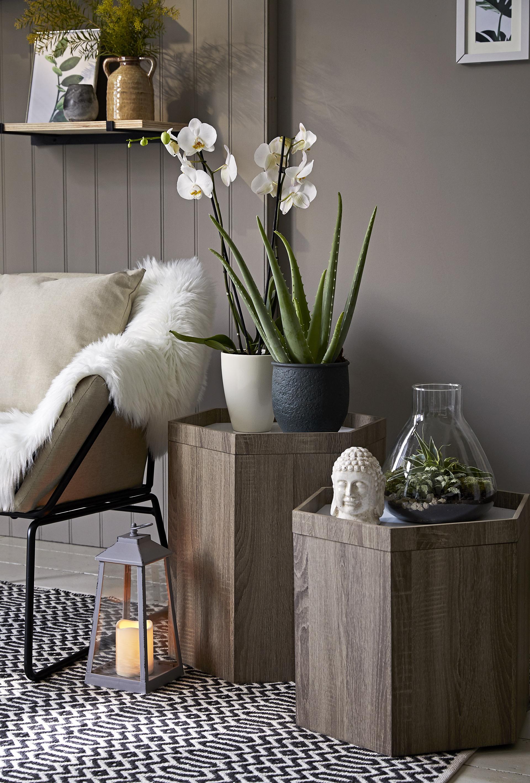 Pot plants indoors