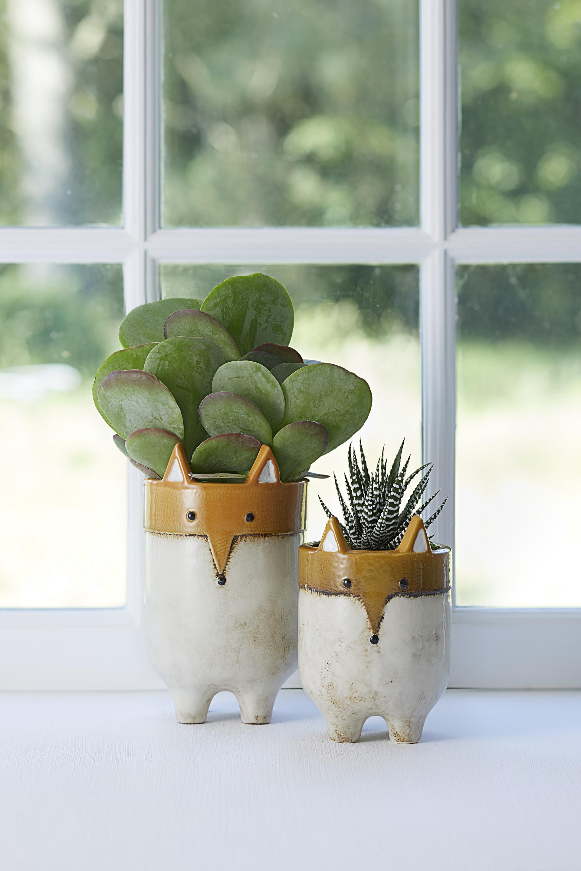 Mini kalanchoe succulent