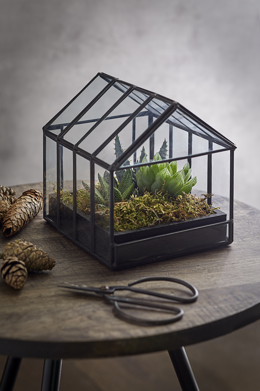 Mini succulent green-house