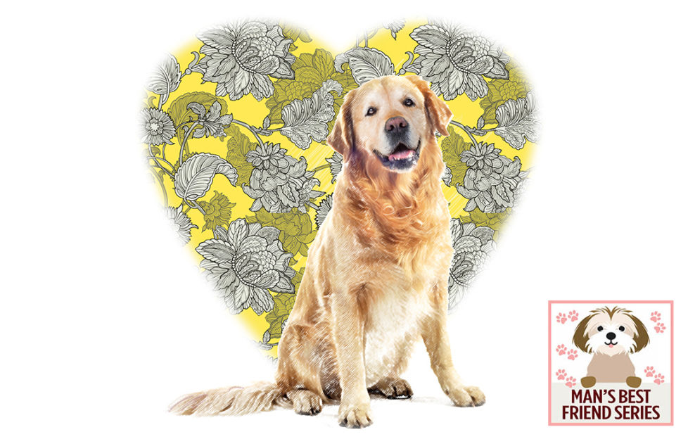 golden retriever, large wallpaper-patterned heart shape behind, love me love my dog