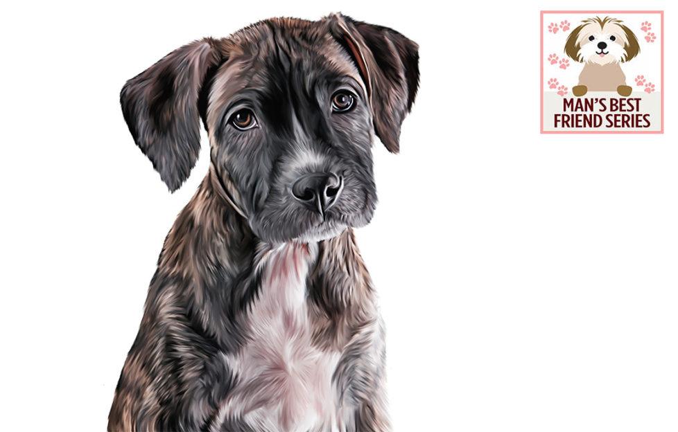 Illustration of sad-looking small mongrel rehomed dog