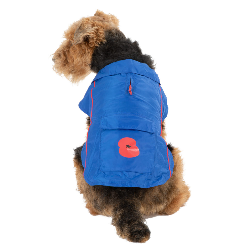Airedale terrier dog wearing blue waterproof coat with poppy emblem on back