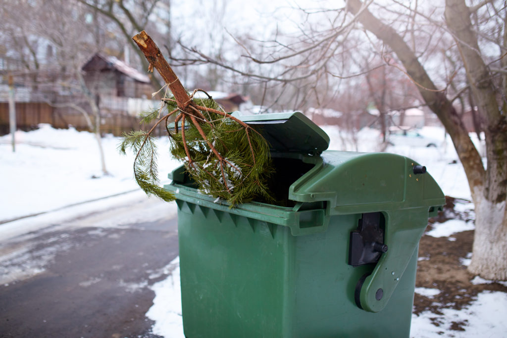 End of Christmas. Used and abandoned cutted fir tree in garbage bin waits for collection by by garbage truck. Irresponsible behavior towards nature, save forest, keep green concept. Deforestation ban.