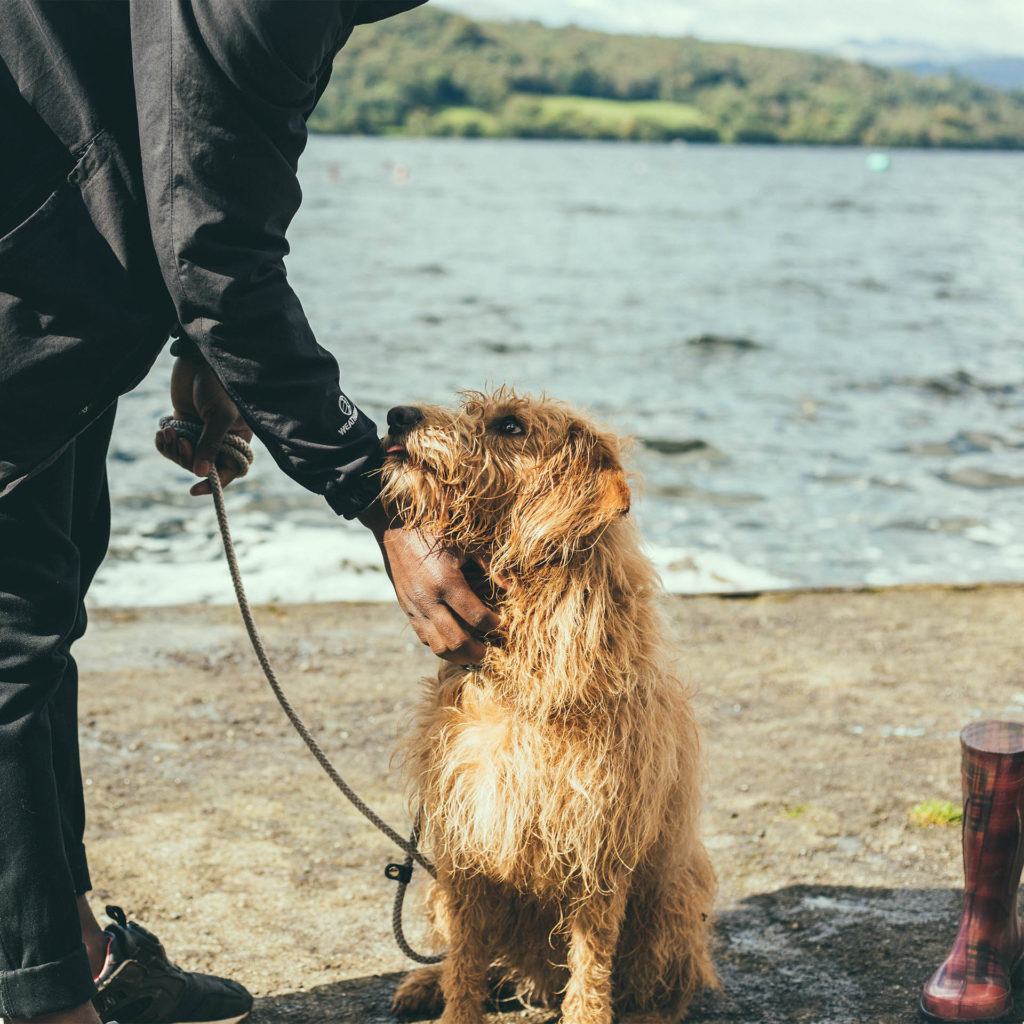 Wet wire haired dog beside lake being petted by owner